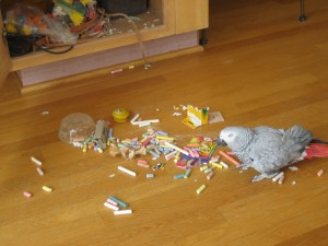 Graycie, having gotten off the cage, snuck into a cabinet, pulled out a package of chalk, and strewn it all over the floor