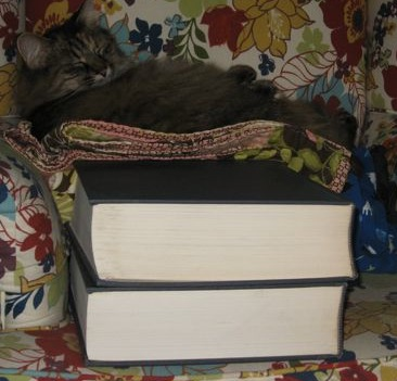 Cat on OED