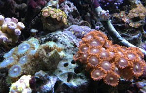 13B Zoas