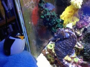 RP & seahorse