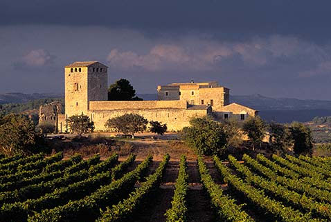 Spain_Vineyards-in-Spain_5430