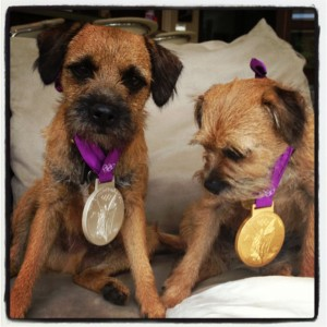 andy-murrays-dogs-wearing-his-olympic-medals