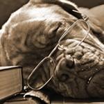 Dog in Glasses sleeping in Books